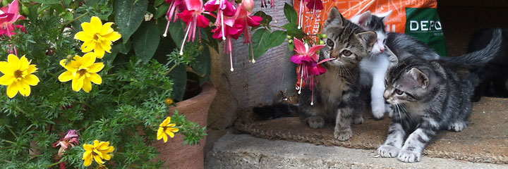 Für Katzen ist Ransweiler mit seinen vielen Wiesen ein reines Abenteuerland