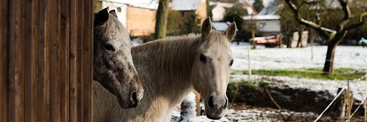 Ein Paradies für Pferdeliebhaber