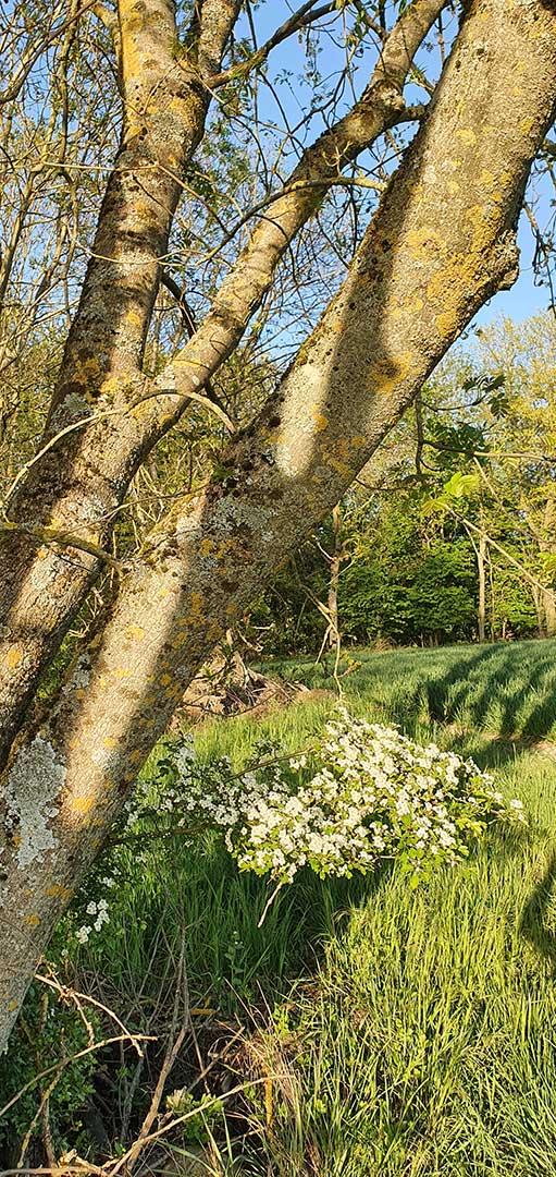 Frühling in Ransweiler